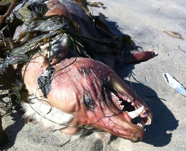 """Con quái vật có """"kiểu đầu"""" mohawk với túm lông màu vàng đã tẩy trắng, phần da bị sạm nắng và một cặp răng nanh dữ tợn."""