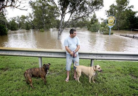 Người đàn ông dắt hai chú chó đứng nhìn cảnh nước bao quanh với vẻ chán nản ở thị trấn Moree.
