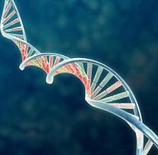 Nghiện ngập ma túy cũng mang yếu tố di truyền