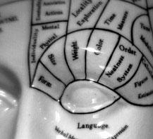 Bí quyết có nhiều bạn bè nằm ở vùng não trước