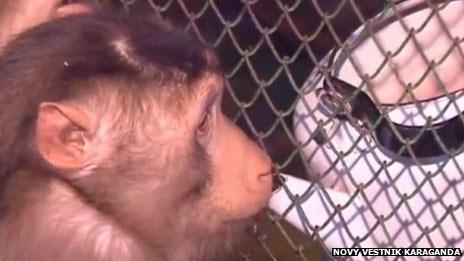 Khỉ chống lạnh bằng rượu vang