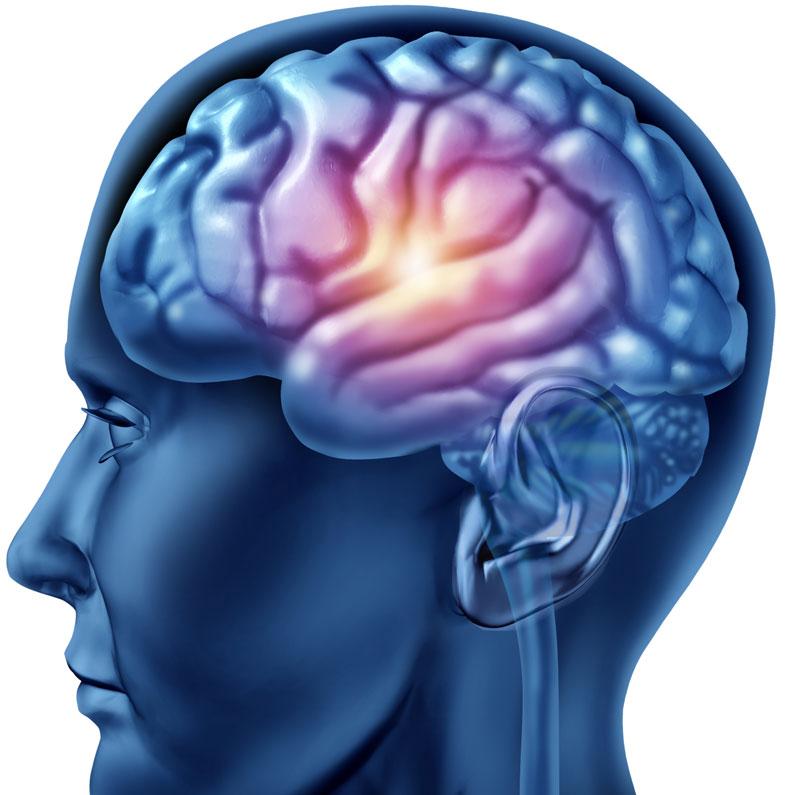 Kích thích vỏ não sẽ giúp tăng cường về trí nhớ