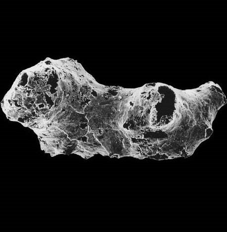 Phát hiện động vật cổ xưa nhất Trái đất
