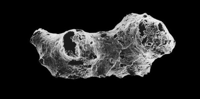 Hóa thạch của sinh vật Otavia antiqua dưới kính hiển vi