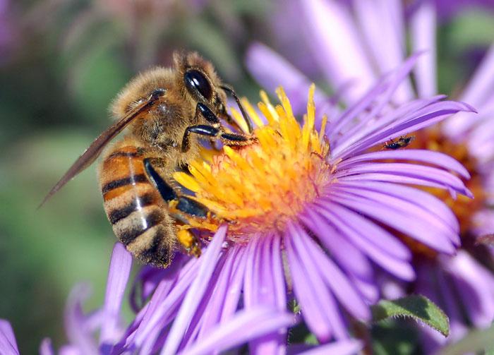 Đàn ong sẵn sàng đàn áp quyết liệt đối thủ
