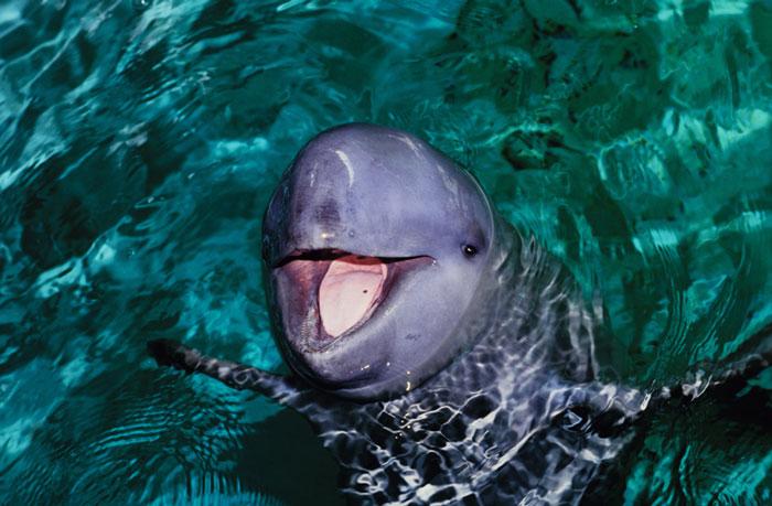 Lập khu bảo tồn mới để bảo vệ cá heo quý hiếm