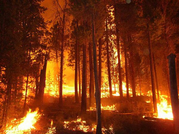 Khói bụi cháy rừng là sát thủ với nhân loại