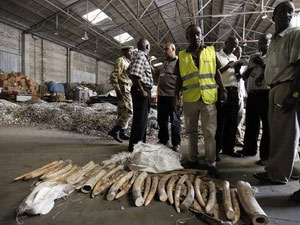 Hàng trăm chú voi rừng bị thảm sát tại Cameroon