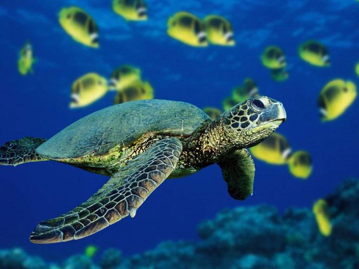 Những sinh vật dựa vào từ trường để di trú như rùa, có thể bị mất phương hướng khi trái đất đảo cực