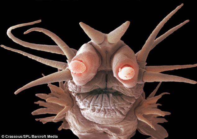 Loài trùng có vảy đã tiến hóa để thích hợp với điều kiện sống