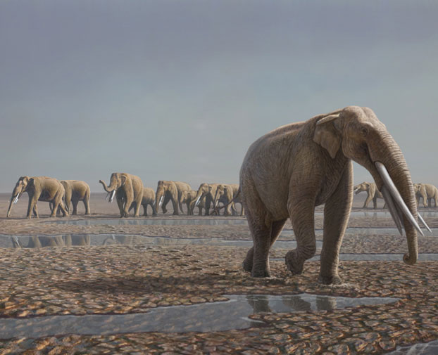 Phát hiện dấu chân voi cổ đại