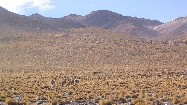 Ốc đảo ngầm dưới sa mạc khô cằn nhất thế giới