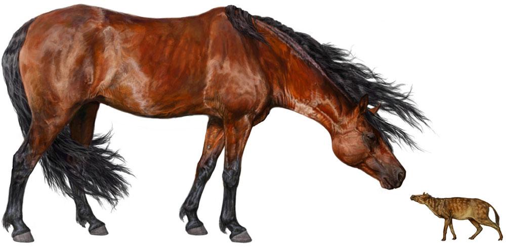 Ngựa nhỏ như... mèo