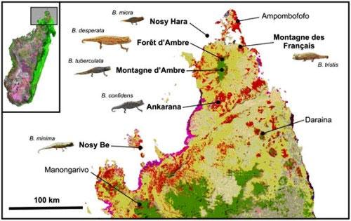 Bản đồ phân bố loài tắc kè hoa tại Madagascar