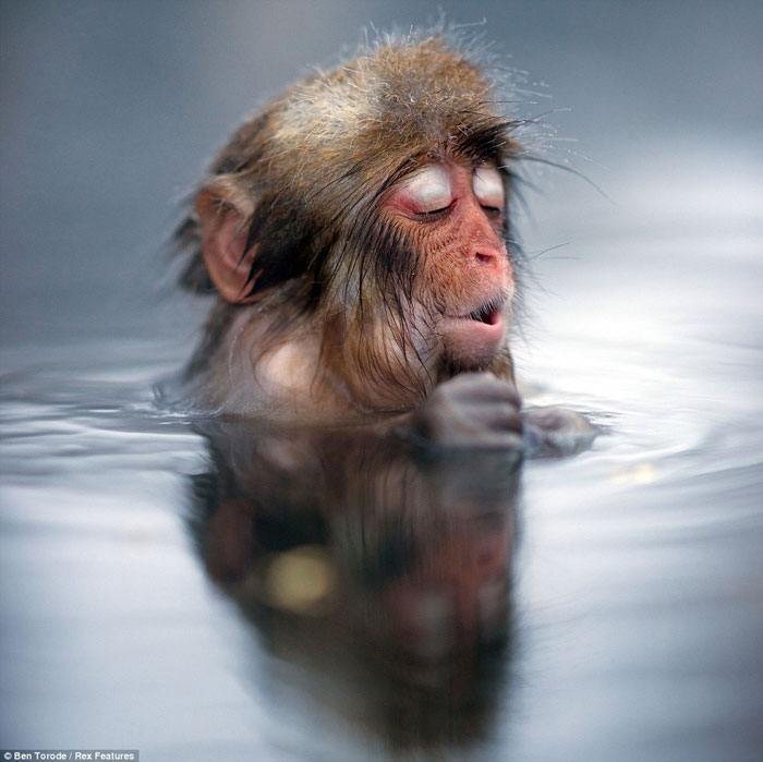 Phút xuất thần với khuôn mặt biểu cảm như người khi con khi tuyết trầm mình trong suối nước nóng