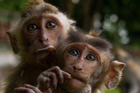 Khỉ tấn công người