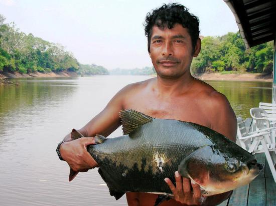 Hệ sinh thái sông Amazon