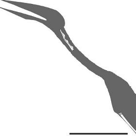Tìm thấy hóa thạch loài bò sát bay mới