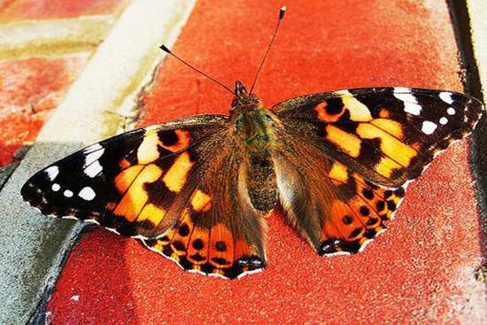 Khi ong và bướm biến mất khỏi thảm hoa, bạn có thể đoán được rằng một trận cuồng phong đang tới.
