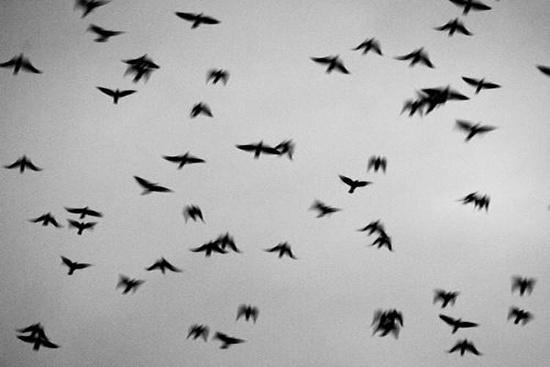 Phụ thuộc vào độ bay cao thấp của chim mà chúng ta có thể đoán được tình trạng tốt/xấu của thời tiết. Nếu chim bay cao, thời tiết rất đẹp. Nếu chúng bay thấp, thời tiết đang xấu. Nguyên nhân của hiện tượng này là do áp lực không khí khi có bão khiến chúng cảm thấy đau khi bay ở trên cao.