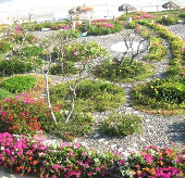 Thảm hoa giữ môi trường bãi biển