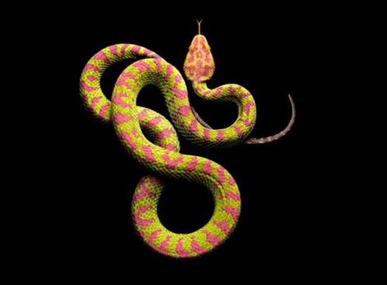 Đây là con rắn Philippine Pitviper cũng thuộc chi rắn độc Pitviper nhưng thường được tìm thấy ở Philippines.