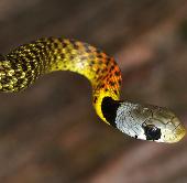 """Ngắm vẻ đẹp """"tử thần"""" của loài rắn bảy màu Việt Nam"""