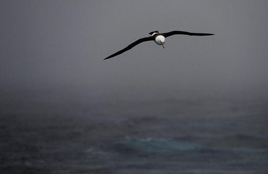 Chú chim hải âu Hiền Triết