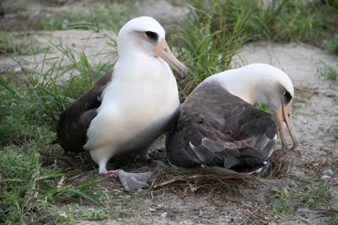 Con chim già nhất thế giới đẻ trứng
