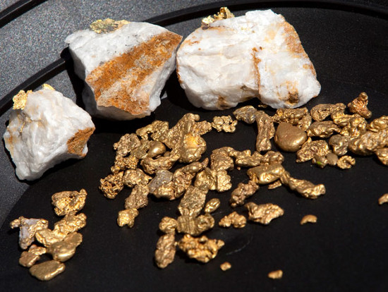 Một số vi khuẩn đặc biệt được phát hiện có khả năng bài tiết ra vàng