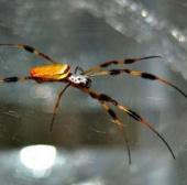 Khám phá bí ẩn tơ nhện