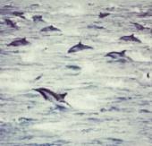 Video: 100.000 cá heo tụ tập bí ẩn ở bờ biển Mỹ