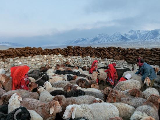 Tại khu vực thung lũng cằn cỗi có tên là Tiểu Pamir, sự sống còn của người dân phụ thuộc vào đàn gia súc của họ.