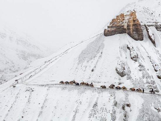 Trên con đường hiểm trở nằm vắt ngang một sườn núi cao chót vót phủ đầy bằng tuyết, một đoàn thương nhân lữ hành dựa vào những đôi chân vững chãi của loài bò Tây Tạng để đi xuống một thung lũng thấp hơn.