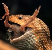 Video: Ếch giúp bạn thoát khỏi miệng rắn