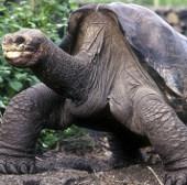 Loài bò sát trước nguy cơ tuyệt chủng