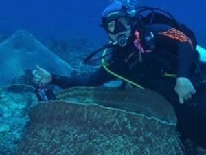 Chuyên gia và hải miên (sinh vật xốp dưới biển).