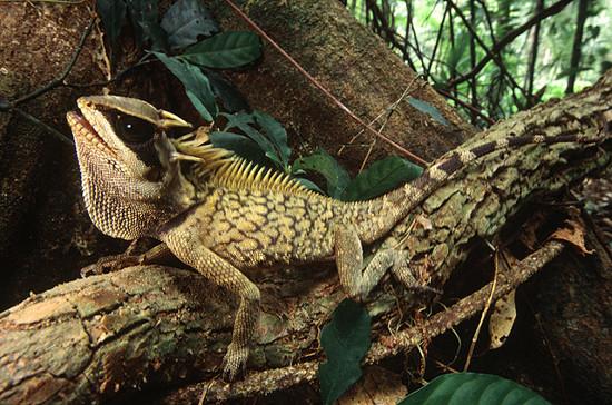 Môi trường sống ưa thích của chúng là những cành cây rậm rạp của rừng nhiệt đới.