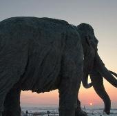 Phát hiện xương voi ma mút phương Nam quý hiếm