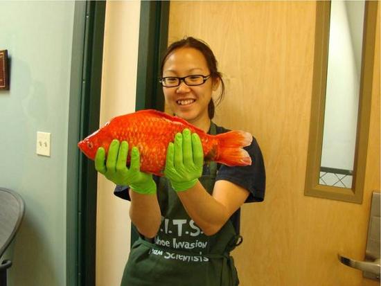 Một con cá vàng mà các nhà khoa học phát hiện trong hồ Tahoe.