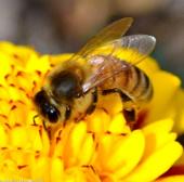 Ong có thể phát hiện và phân biệt các tín hiệu điện từ các bông hoa