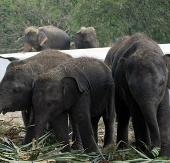 Thái Lan là quốc gia có nạn buôn bán trái phép ngà voi lớn