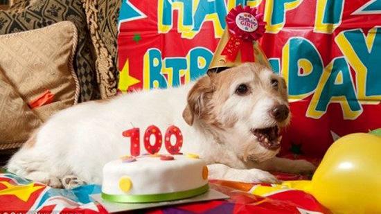 Chú chó thọ nhất nước Anh mừng sinh nhật 22 tuổi