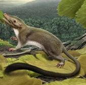 Phát hiện ra tổ tiên sớm nhất của loài người