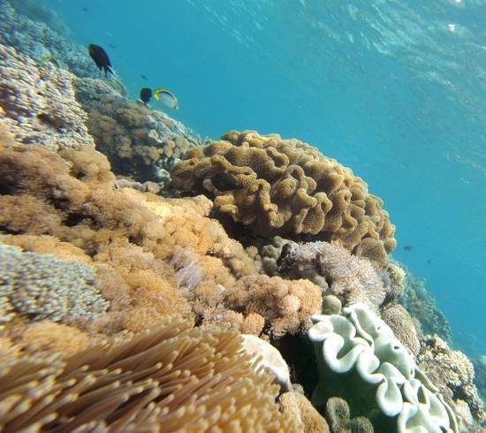 Các nhà khoa học Scotland đang tìm kiếm các loại thuốc kháng sinh mới dưới đáy biển