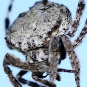 Tơ nhện đủ chắc để dừng một đoàn tàu