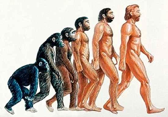 Con người mất lông cơ thể để đi lại bằng 2 chân dễ dàng hơn và để bộ não phát triển hơn.