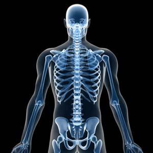 Khả năng sinh sản của đàn ông nằm ở xương