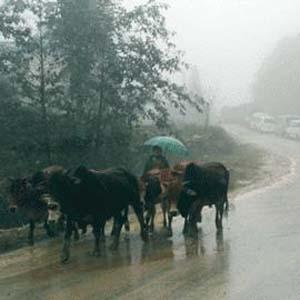 Không khí lạnh tiếp tục ảnh hưởng tới Bắc Trung Bộ