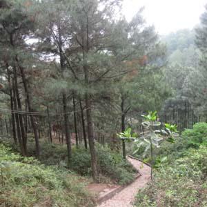 Tái tạo rừng nhiệt đới giữa thủ đô